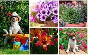 10 best dog safe perennials garden