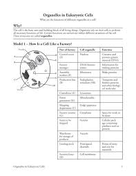 Cell Organelle Chart 8 Organelles In Eukaryote Cells S Pdf