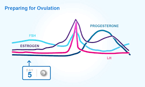 Standard Menstrual Cycle Chart Understand The Female Menstrual Cycle Ovulation And Periods
