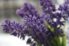 Разгледайте 【 1687 】 актуални обяви от раздел стайни растения от цяла българия. Stajni Rasteniya Polezni Za Zdraveto Ni Plants