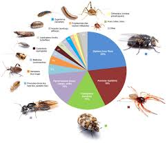The Dozens Of Bug Species That Live In Your Home In One