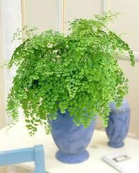 office plants no light. A Office Plants No Light