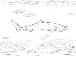 Small Picture Crocodile Shark coloring page Free Printable Coloring Pages