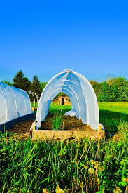 garden tunnel raised bed hoop house greenhouse polytunnel pest control