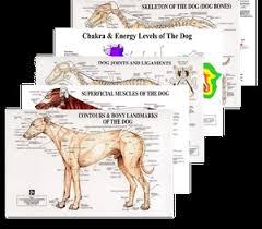 Animal Chakra Chart Petmassage Chart Complete Set
