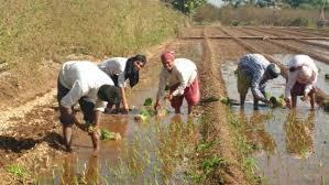 Project Agri – Prachi Bhutada