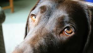 <b>Dogs</b> Evolved a <b>Special</b> Muscle That Lets Them Make '<b>Puppy Dog</b> ...