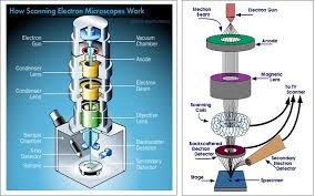 Scanning Electron Microscope Sem How It Works Scanning