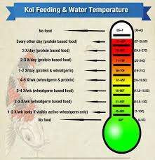 Goldfish Feeding Chart Feeding Your Koi As Water Temperatures Change