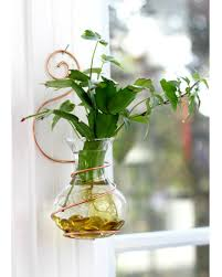 plant rooters starters hanging water gardens brass erfly stained glass wall coil alt 72 sized wall coil alt2 72 sized