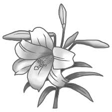 夏の花3テッポウユリ1鉄砲百合モノクロ花イラストお花と季節のお礼状