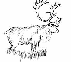 Small Picture free Caribou coloring page embroidery patterns Pinterest