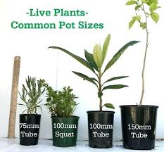 Nursery Container Sizes Chart Flower Pot Sizes Scandinord Co
