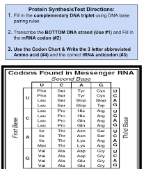 Template strand is the dna strand off which the mrna is synthesized. Protein Synthesis Test Worksheet