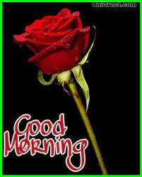 Top 70 Good Morning Rose Flowers Images ...