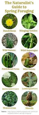 best herbal plants ideas the growers exchange best 25 herbal plants ideas the growers exchange herb and oil garden