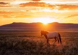 wild horses sunset. Brilliant Horses Onaqui Herd Wild Horses At Sunset Inside Wild Horses Sunset E
