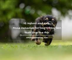 15 Instant & Easy Home Remedies for Dog's Itchy Skin - eHome Remedies