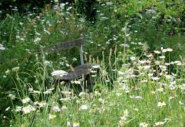Small Picture Wild Flower Turf Lisa Cox Garden Designs Blog