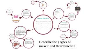2 02 Skeletal Muscle Chart Describe The 3 Types Of Muscle And Their Function By Lauren