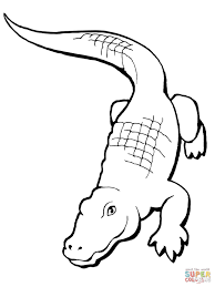 Small Picture Realistic Alligator coloring page Free Printable Coloring Pages
