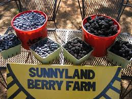 A CLOSER LOOK: Berry farming has a 'sunny' tradition in Booneville   KNWA  FOX24