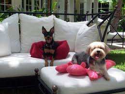 dog lounge chair for outdoor use