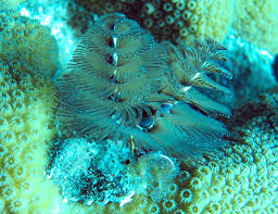 12 Best Christmas Tree Worms Images On Pinterest  Christmas Trees Christmas Tree Worm Facts