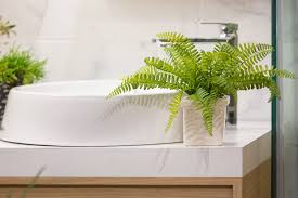 a perfect choice for anywhere in the home they don t require plentiful sunshine and only need infrequent watering and will grow well in a bathroom
