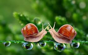 amazing snail wallpaper