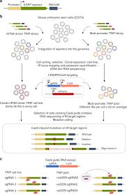 Crispr Cas9 Guide Rna Design Multiplexed Cas9 Targeting Reveals Genomic Location Effects