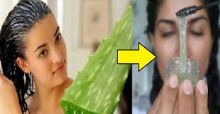 aloe vera for hair benefits how to