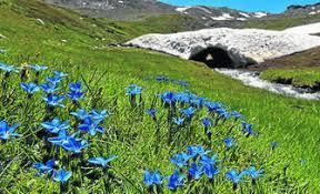 Resultado de imagen de primavera sierra nevada