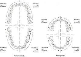 Periodontal Charting Symbols Dental Charting At Cdi College Studyblue