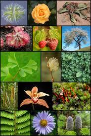Природа Википедия Растения и животные править править код
