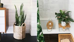 Plant Interior Design Fascinating The 48 Best Bathroom Plants To Thrive In HighHumidity Areas