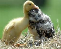 real baby farm animals. Wonderful Baby Real Baby Farm Animals  Photo14 For Baby Farm Animals G