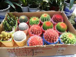 Small Picture How to Make Cactus Garden Ideas Luxury Homes