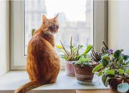 plants are safe for cats