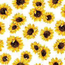 Sunflower Pattern Unique Sunflower Pattern Stock Photo Picture And Royalty Free Image Image