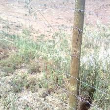 Hacer Estacas De Acacia  Muy Duraderas Para Cercar Fincas Como Cerrar Una Finca