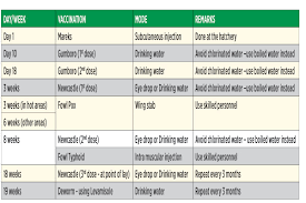 Chicks Vaccination Chart Diary Of A Poultry Farmer Vaccination Schedule For Kienyeji