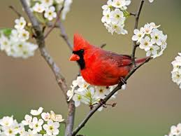 images of flowers and birds. Brilliant And Flowers And Birds Beautiful Wallpapers To Images Of And Birds