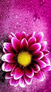 Iphone 3d Wallpaper Flower - 1080x1920 ...