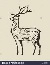 Elk Meat Diagram Schematics Online