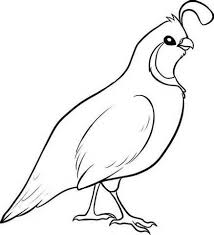 Small Picture Quail Coloring Page 7 Manna From Heaven Coloring Page 126