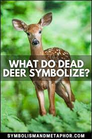 dead deer symbolism 7 meanings