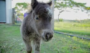 baby mini horse. Modren Horse In Baby Mini Horse