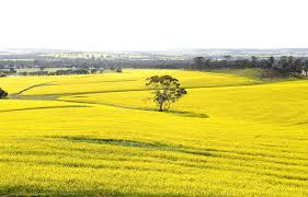 Western Australian grains industry | Agriculture and Food