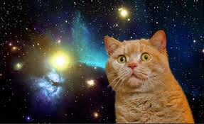 hd space cats wallpaper. Wonderful Cats Cat Wallpaper Dump  I Use These For A Screensaver My Daughters Album  On Imgur In Hd Space Cats